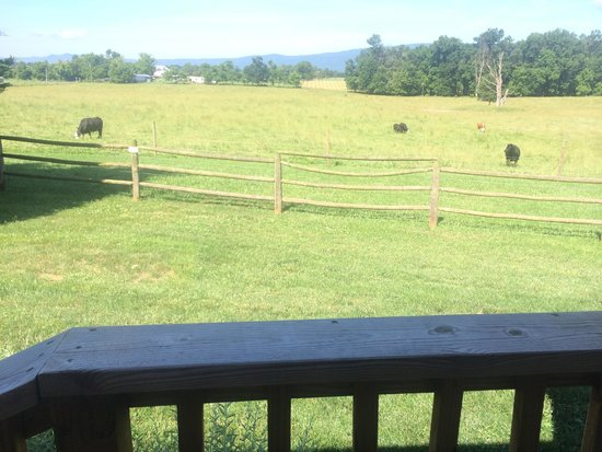 Piney Hill Bed & Breakfast: View form a cabin deck