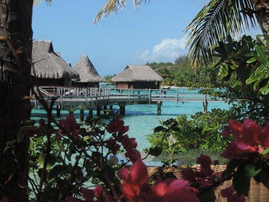 Sofitel Bora Bora Private Island : Vue du restaurant