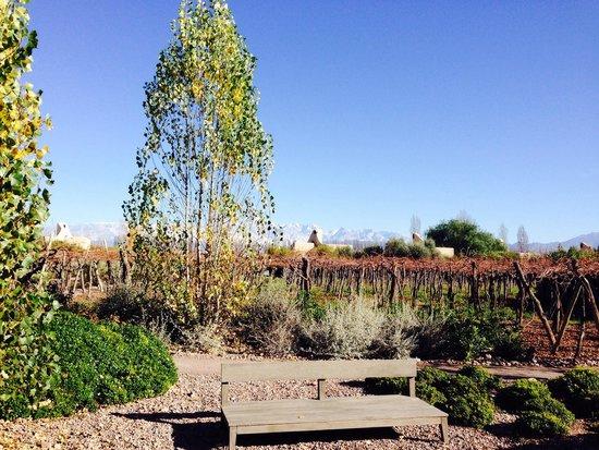 Cavas Wine Lodge: Paisagem perfeita!