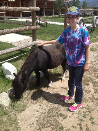 Mt Princeton Riding Stables & Equestrian Center : shetland eating lunch