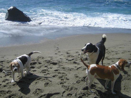Bau Beach: Baubeach, un MUST per chi ama il proprio cane !!