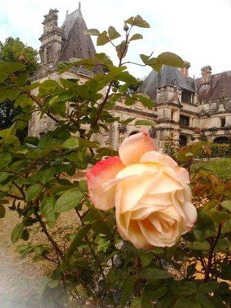 Le Chateau des Enigmes : les roses brillent le château avec son jolie visage et son parfait odeur...