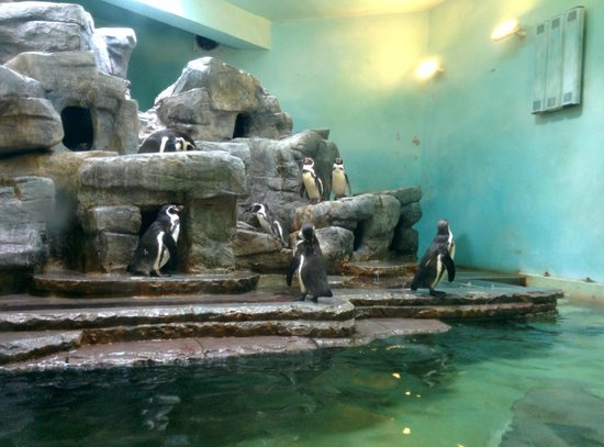 Prague Zoo : :)