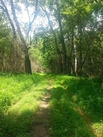 A trail at Anne Springs Close Greenway