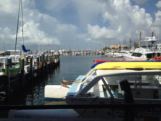 Conch Republic Seafood: The View