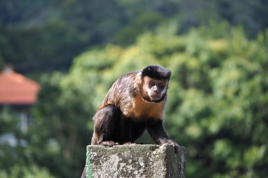 Luis Darin Tour Guide In Rio: Monkey @ Corcovado