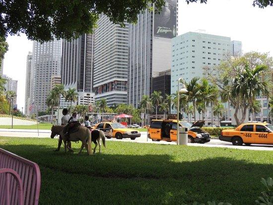 Bayfront Park : pony rides on Sunday