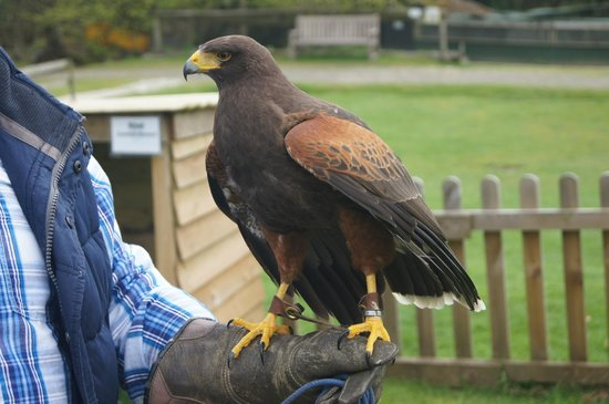 Tamar Otter and Wildlife Centre: A Bird in the hand!!!