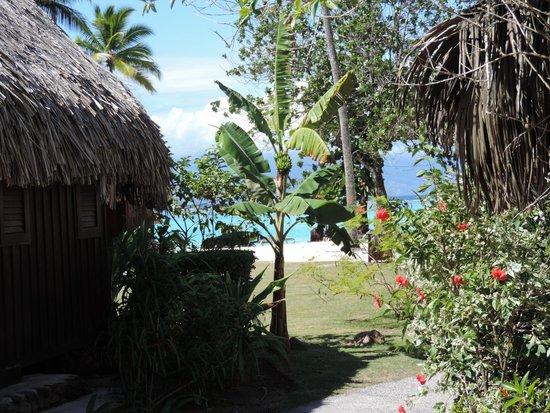 Sofitel Moorea Ia Ora Beach Resort : Vue des bungalows jardin