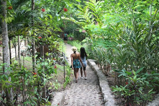 Table Rock Jungle Lodge: Walking to the dinning hall