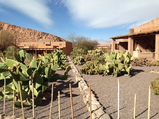 Alto Atacama Desert Lodge & Spa: Landscaping on the grounds