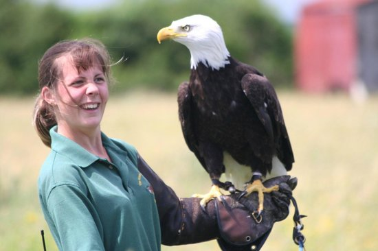 Hawk Conservancy Trust : American Bald Eagle & Friend