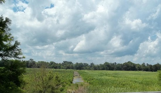 Brookgreen Gardens: old rice field