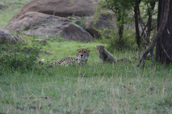 Lemala Kuria Hills Lodge : Cheetah & Her Cub