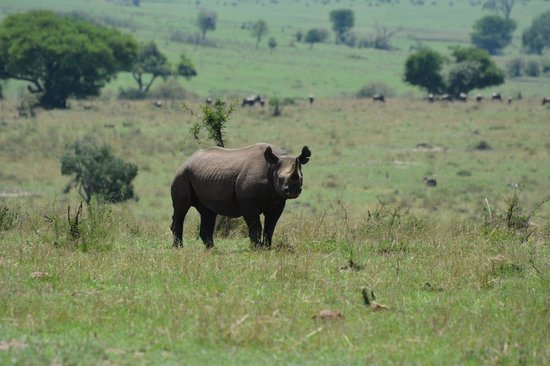 Lemala Kuria Hills Lodge: Rhino Rare Sight