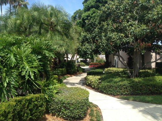 Grand Hyatt Tampa Bay: The walk between the casitas, beautiful and well kept.