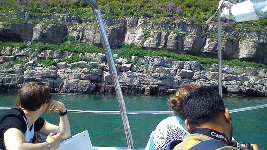 Starida Puffin Island Cruises & Sea Fishing Trips: Island Princess at Puffin Island