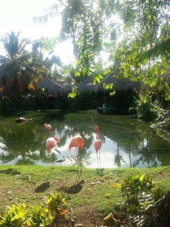 Natura Park Beach - EcoResort & Spa : Flamingos