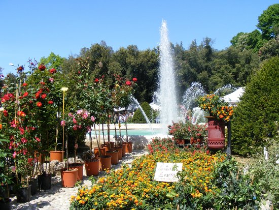 NH Siena: Flower Show