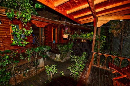 Log Home Boutique Hotel : vue terrasse et vegetation