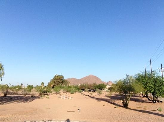 Saguaro Scottsdale : along the canal close by