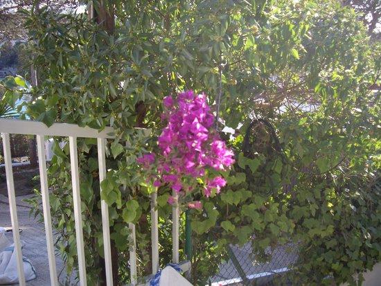 Cala de S'Arenal Gros: flora