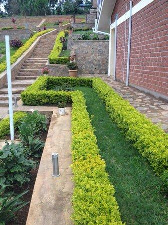 Avocado Lodge: Nice looking hedge along pathway