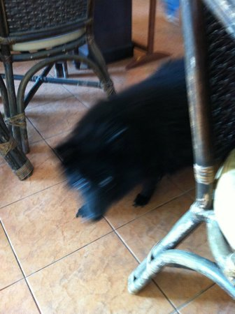 WW Will Wait Bakery & Restaurant: Black dog in the restaurant