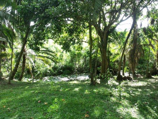 Kibale Forest Camp: Moeras vlakbij hotel