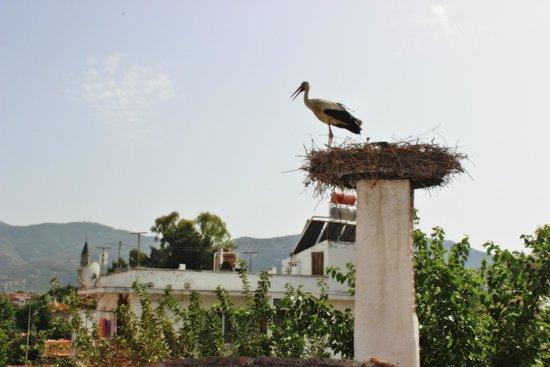 Barim Pension : Üst katlardan görünen leyleğimiz... - Stork from our upstair...