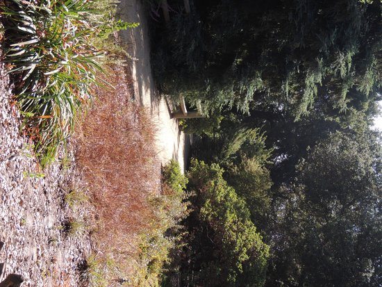 Rancho Santa Ana Botanic Garden: path