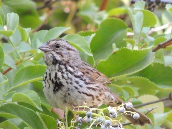 Rancho Santa Ana Botanic Garden : bird (unknown name?)