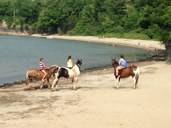 Barcelona Lakeside Bed and Breakfast: horses on beach