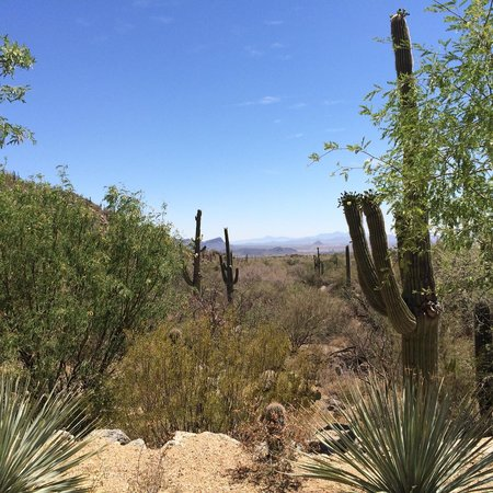 The Ritz-Carlton, Dove Mountain: Scenic view from the Casita area