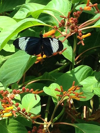 Sachs Butterfly House: Up close with a butterfly