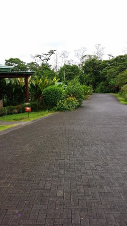 Arenal Manoa Hotel: hotel grounds