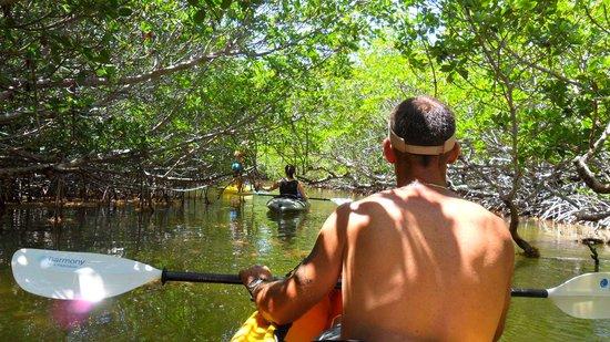 Boyd's Key West Campground : Lazy Dog Kayaking