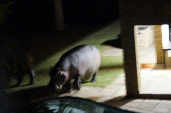 Little Eden St Lucia: Hippo in the garden
