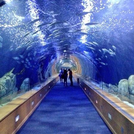Oceanografic: tunnel sommerso