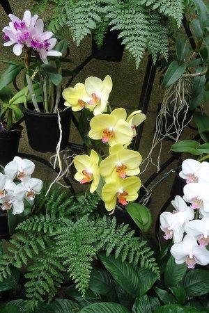 Longwood Gardens : Orchids