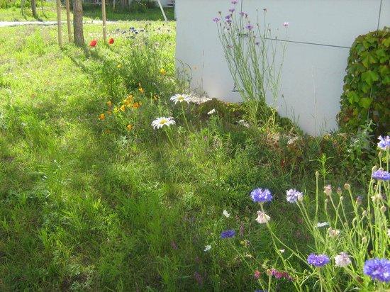Resort Amarin: Natuurlijke Beplanting Bij Bungalow