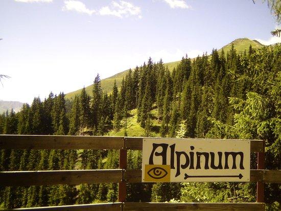 Botanischer Garten Alpinum Schatzalp: Eingang zum Alpinum
