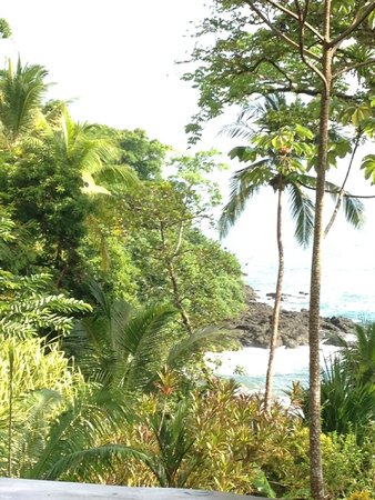 Copa de Arbol Beach and Rainforest Resort : View from the restaurant/ dining room