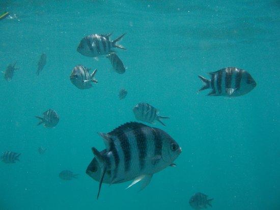 Νήσος Πράσλιν, Σεϋχέλλες: .