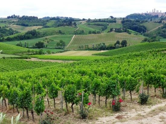 Walkabout Florence Tours : Organic Farm Lunch Here