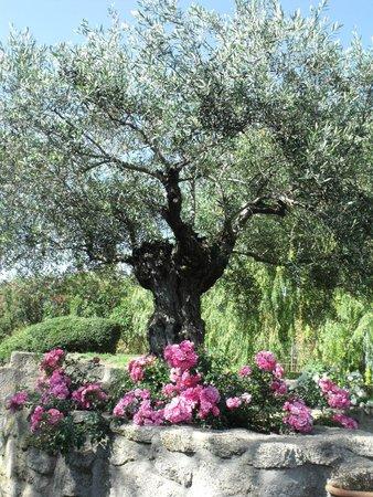 Jardin de st adrien foto di le jardin de saint adrien servian tripadvisor - Les jardins de saint adrien ...