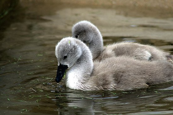 Abbotsbury, UK: young 'uns