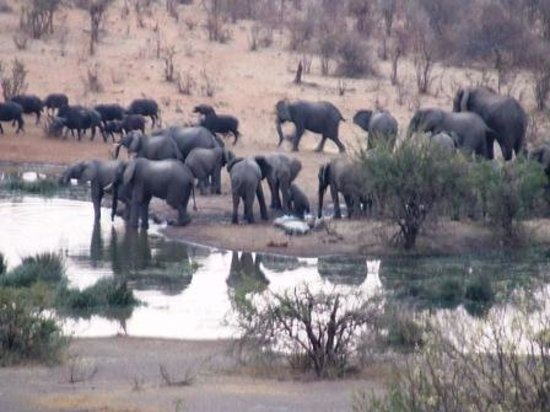 Lokuthula Lodges : Herd of Elephants at the water hole below the hotel