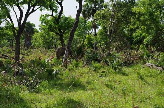 Parc National de la Pendjari : Elefante no Pendjari