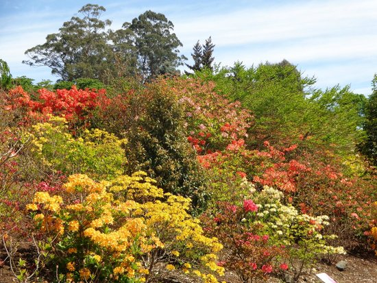 National Rhododendron Gardens: Late Spring